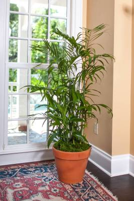 Image result for the bamboo palm