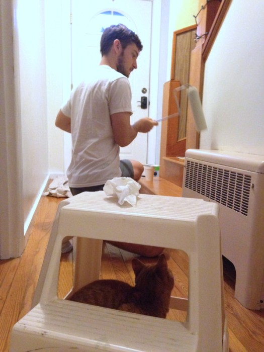 Cat helps paint -- Plaster & Disaster