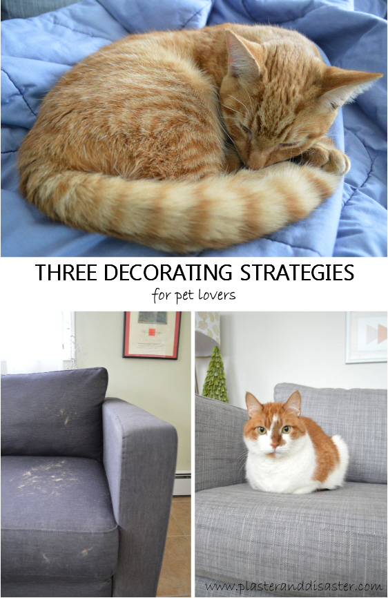 Three decorating strategies for pet lovers - Plaster & Disaster