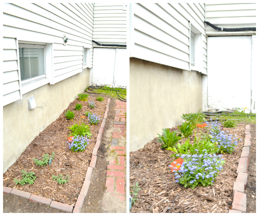 Planting new flower beds -- Plaster & Disaster