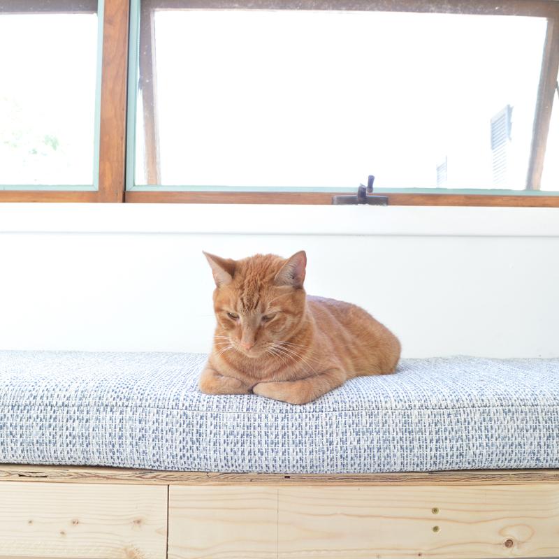 Cat on bench -- Plaster & Disaster