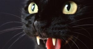 10 Spooky Superstitions About Black Cats From Around the World