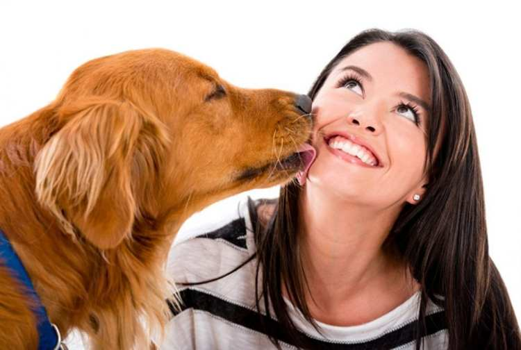 this-bacteria-infection-your-dog-may-carry-is-harmful-to-you