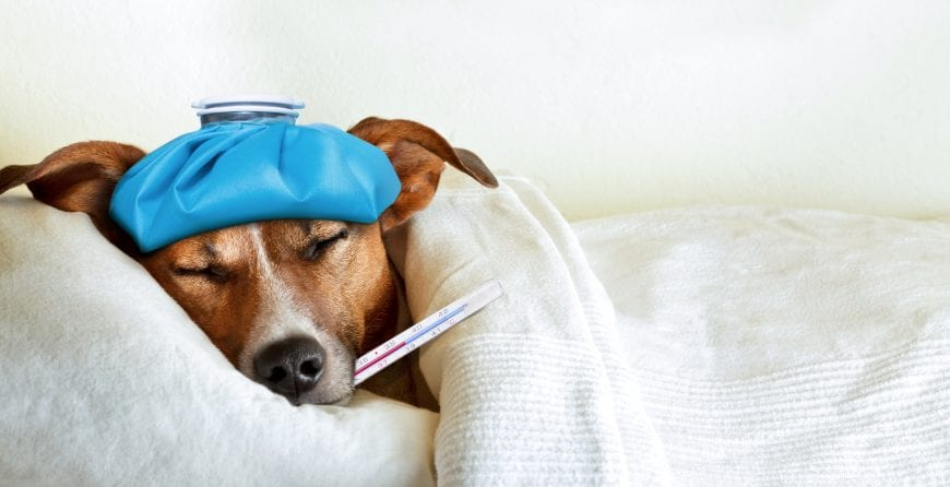 This Bacteria Infection Your Dog May Carry Is Harmful To You