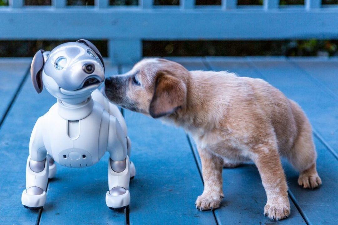 Will Robot Dogs Take The Place Of Our Canine Friends?