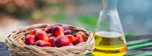 10 Amazing Benefits Of Palm Kernel Oil That You Should Know