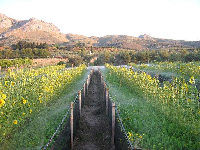 SNAIL FARM ANCIENT CORINTH.jpg