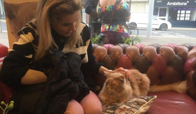 platform magazine, kitty cafe