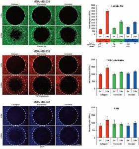 Mutlti-parameter monitoring of cell migration