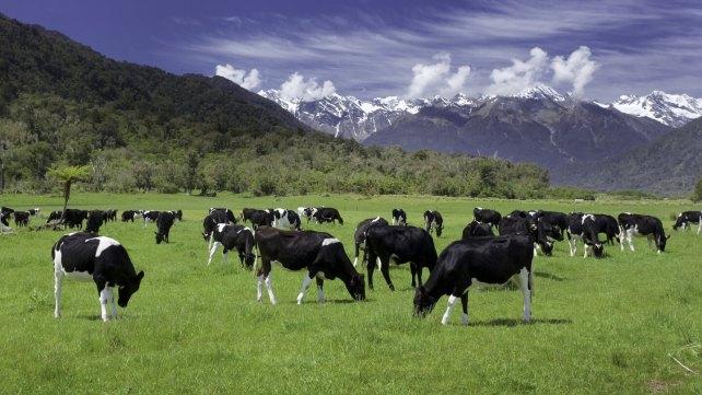紐西蘭打工度假心得分享