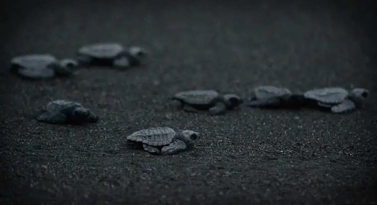 Turtles on beach at night