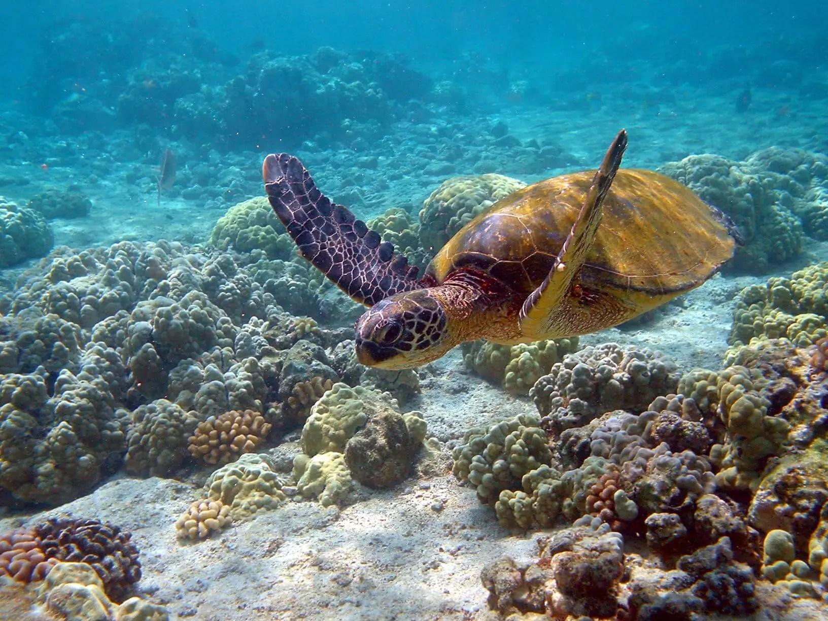 Sea turtle swimming near Akumal