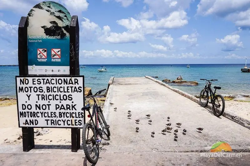 Cozumel Island Caribbean Sea