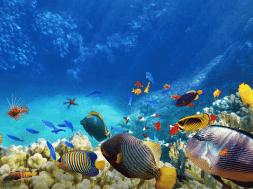 snsorkling fish playa del carmen
