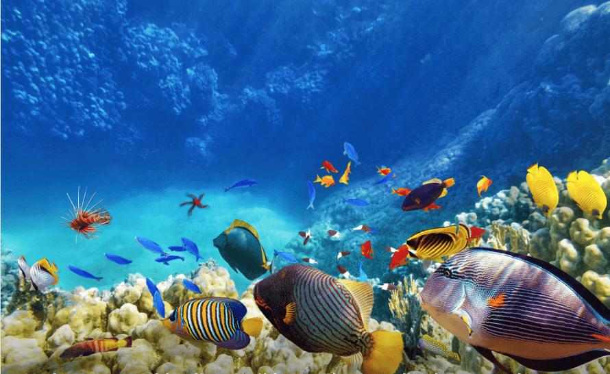 4 Best Snorkel Sites in and Around Playa del Carmen