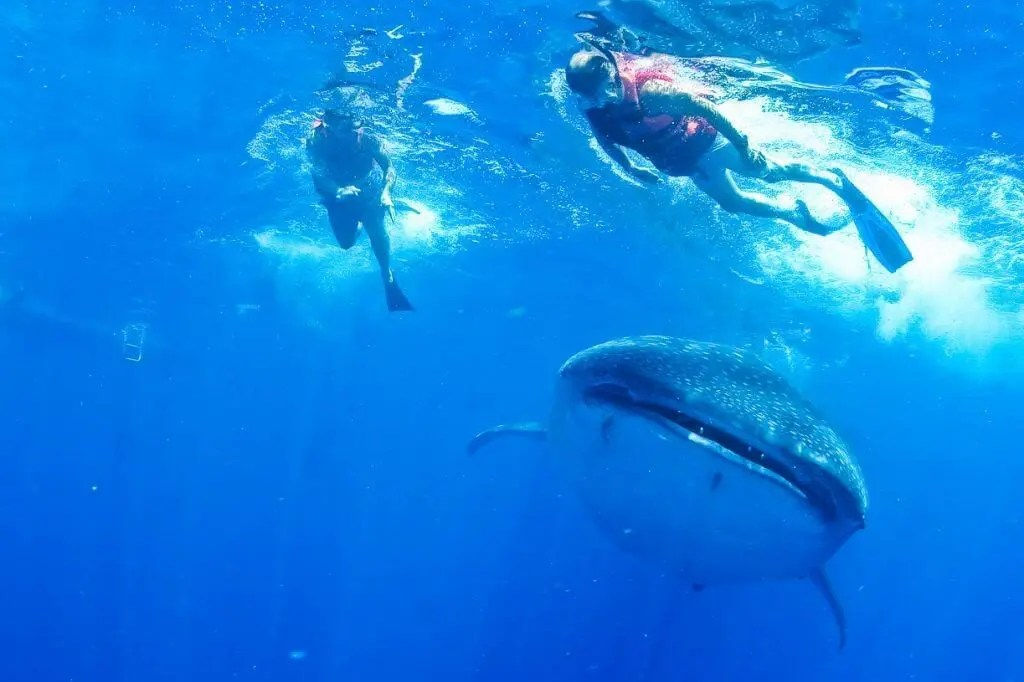 whale sharks mexico tour