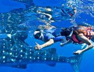 whale-shark-tour-mexico-8