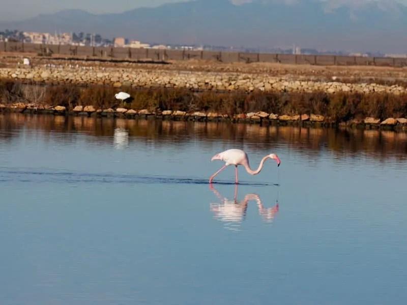Flamingos in Las Salinas Marchamalo salt flats