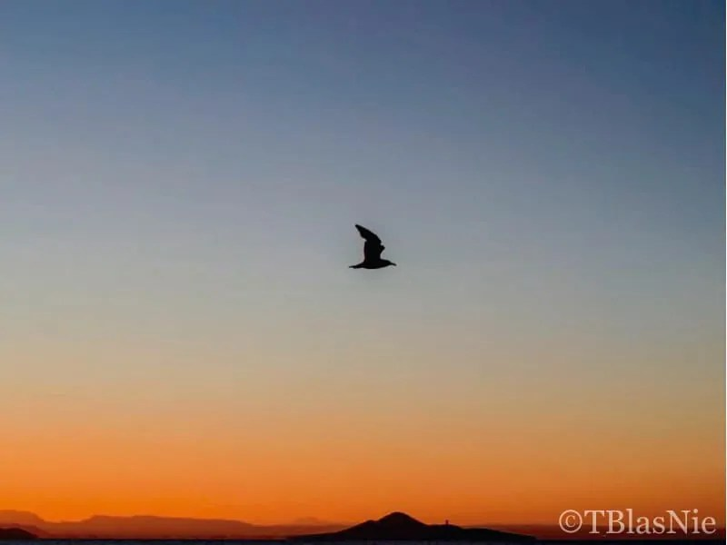 Bird flying over an orange sunset
