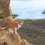 Beautiful cat with Cala Reona in the background