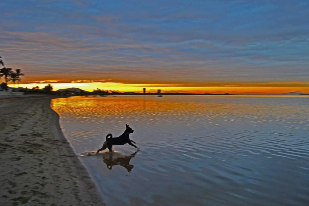 Perro disfrutando la playa