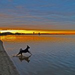 Dog enjoying the beach