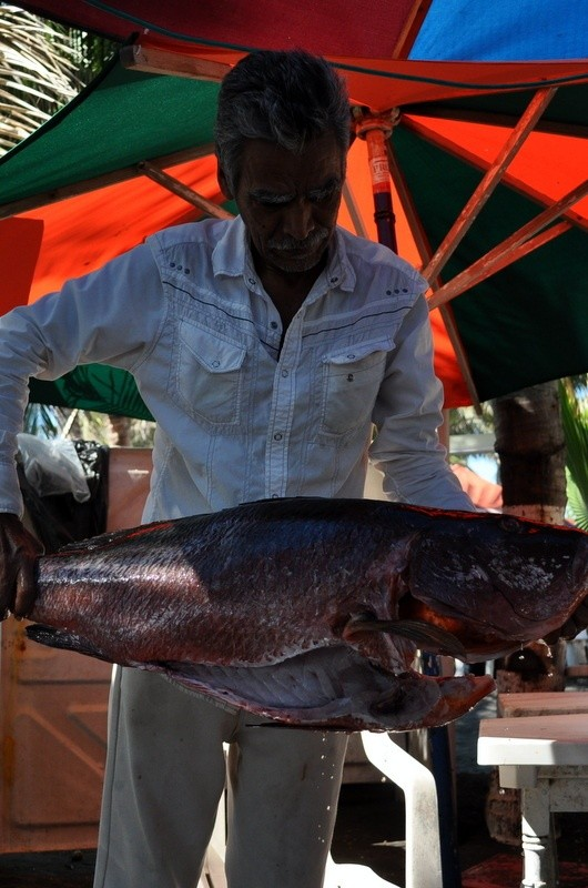Mario holds a large fish at his enremada restaurant in Cuyutlan, Colima