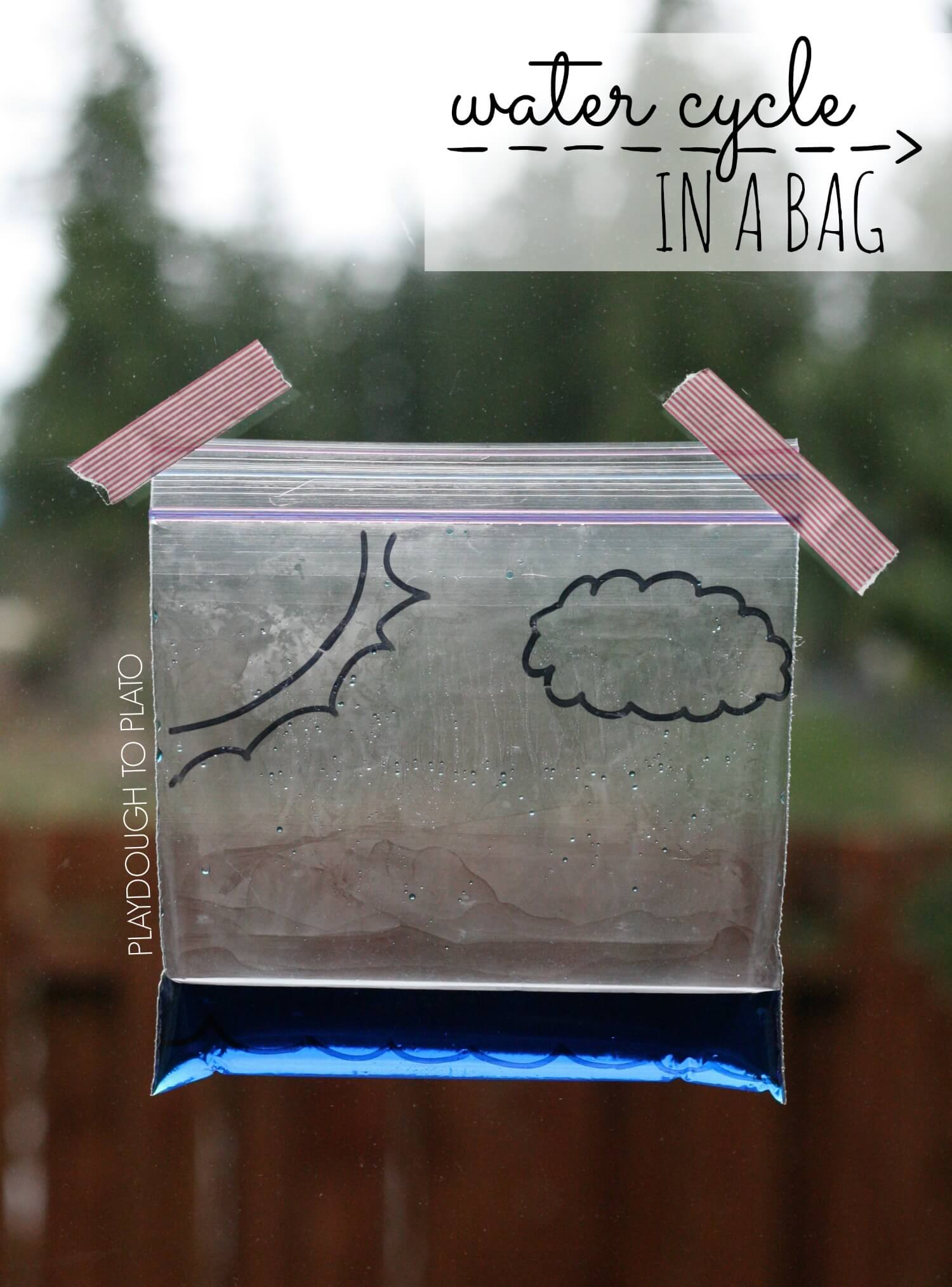 Water Cycle In A Bag