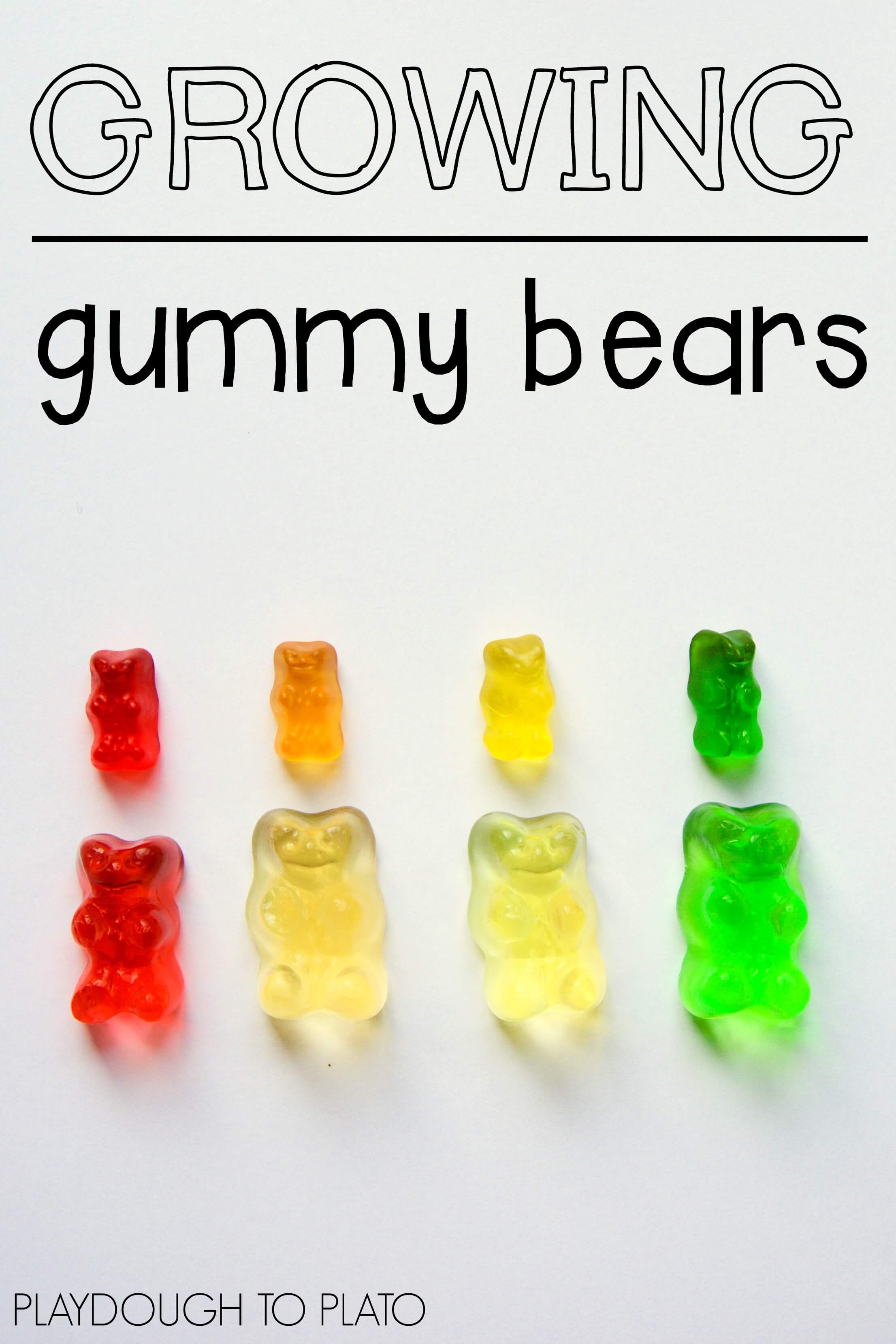 Growing Gummy Bear Science