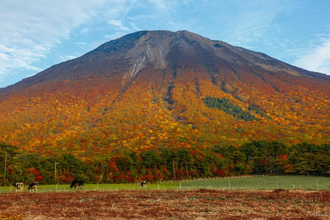 色とりどりの絨毯をまとった秋の大山