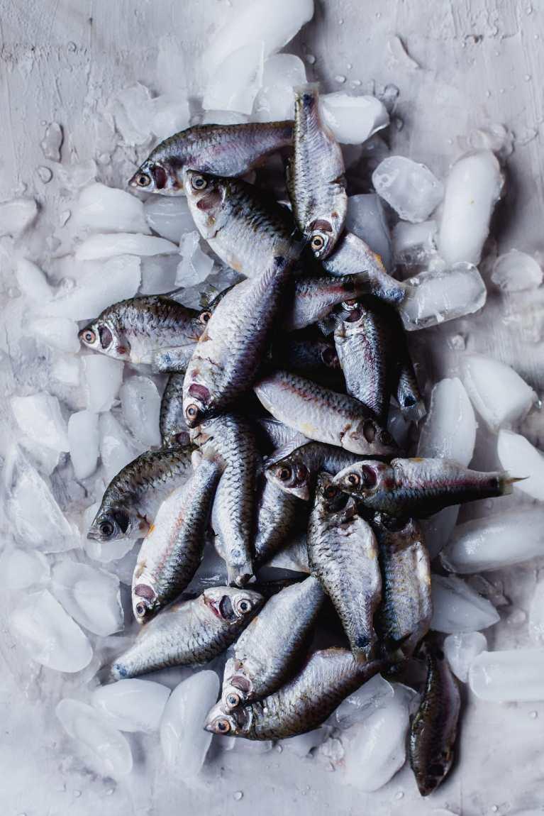 Raw fish, small variety