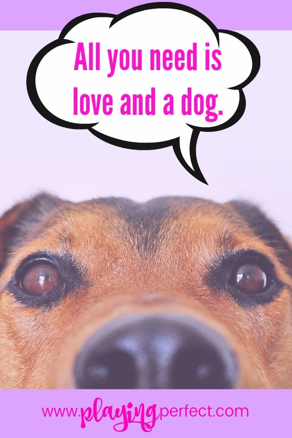 Love My Dog Quotes Inspiration 48 Quotes About Dogs That Will Make You Happy You're A Dog Mom