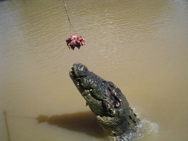 © Romain Dondelinger crocodile australie (4)