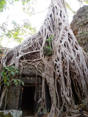 ©playingtheworld-temples-angkor-taprohm-cambodge-voyage-13