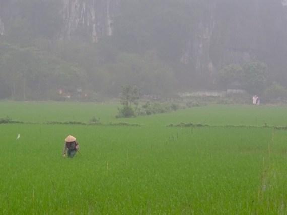 ©playingtheworld-nimhbinh-vietnam-voyage-12