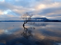 L'arbre solitaire à Wanaka