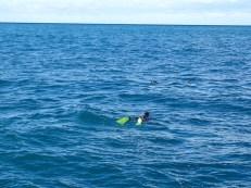 ©playingtheworld-nouvelle-zelande-kaikoura-dauphin-voyage-10