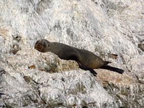 ©playingtheworld-nouvelle-zelande-kaikoura-dauphin-voyage-15