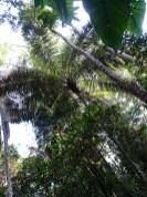 playingtheworld-bolivie-foret-amazonie-selva-rurrenabaque-voyage-21