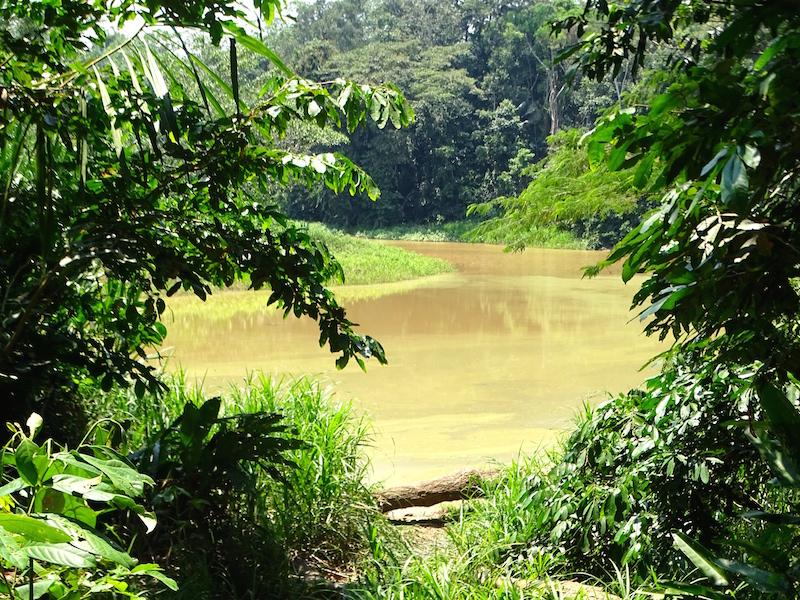 playingtheworld-bolivie-foret-amazonie-selva-rurrenabaque-voyage-35