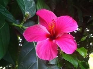 ©playingtheworld-polynesie-maupiti-voyage-20