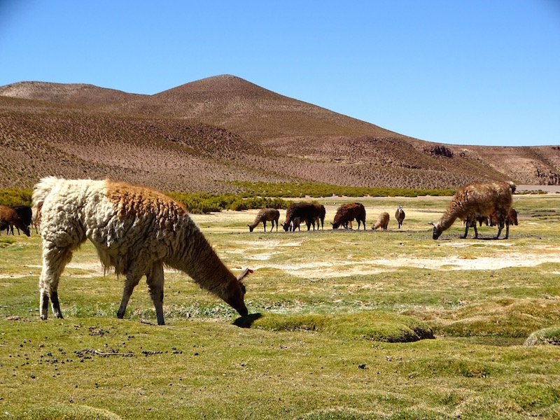 ©playingtheworld-bolivie-salar-uyuni-voyage-45