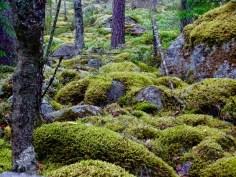 ©playingtheworld-finlande-lacs-mokki-voyage-70