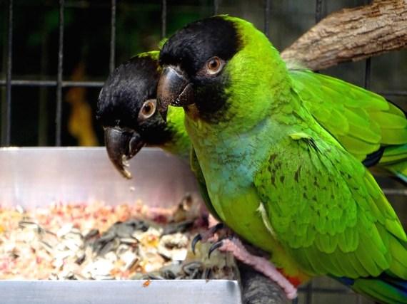 @playingtheworld-bresil-iguazu-oiseau-4