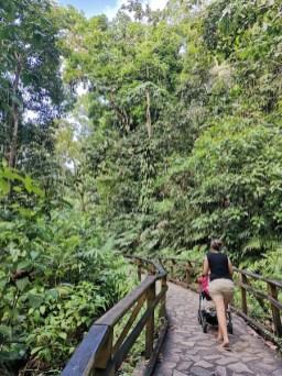 Chemin vers la cascade aux écrevisses
