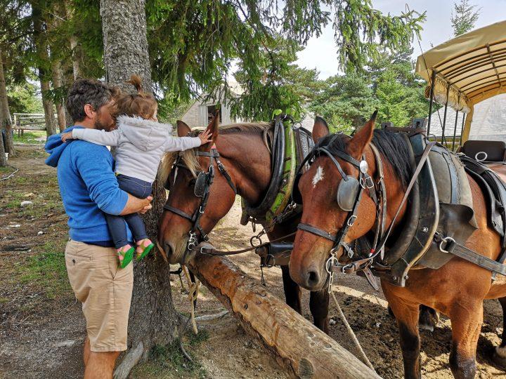 Un bébé caresse un cheval