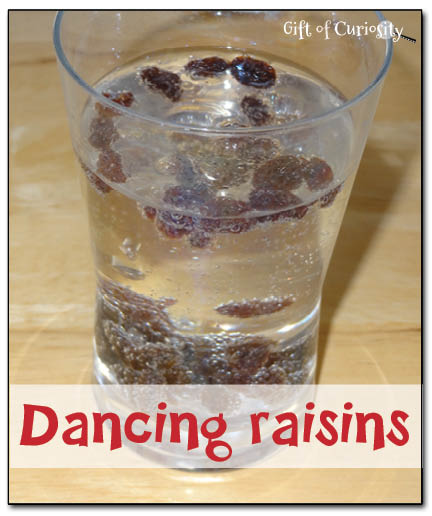 Dancing raisins || Gift of Curiosity