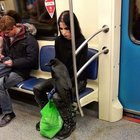 BIiudEw5 s9gYo0qTmgsWUtPgsjN8QblFyt15xQ 79I Just a girl and her raven on the subway...