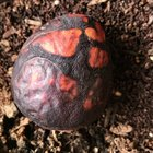 IGQNlATi0hrf3RECt6LmAV3doizHkVcOtrVWcuOuO5E Avocado pit left out in the sun now looks like a mythical egg of sorts.