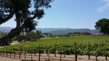 Larner Vineyard, Ballard Canyon